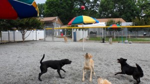 Best Friends Bed & Biscuit | Doggie Daycare | Greensboro NC | Dog Kennel | Cat Boarding | Dog Behavior Training | Grooming & Baths