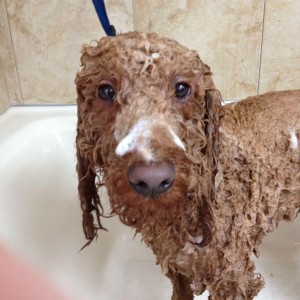 Baths and Grooming Greensboro NC