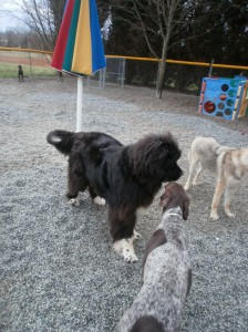 Best Friends Bed & Biscuit Greensboro NC Doggie Daycare