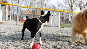 Doggie Daycare | Greensboro NC | Dog Kennel